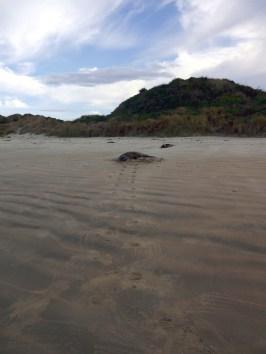 Seal Tracks