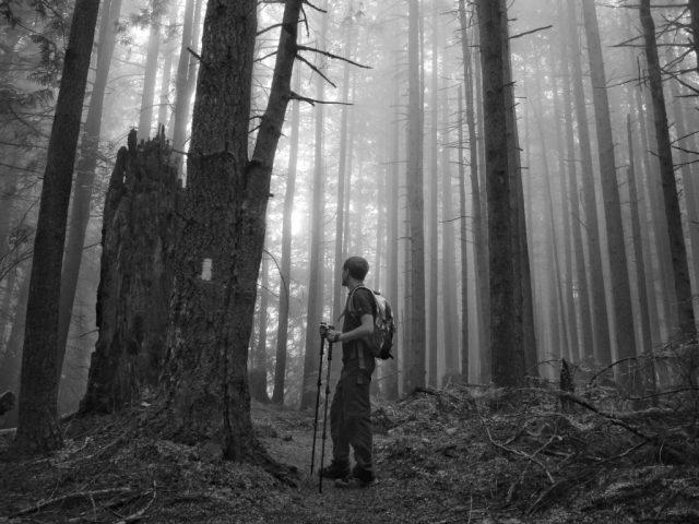A Walk through the Misty Forest