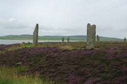 Ring of Brodgar and beautiful heather. Pic credit: Genevieve Romier on Flickr