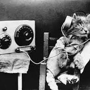 Kitten With Headphones