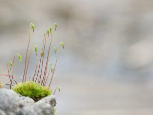 Green Grass On Gray Rock