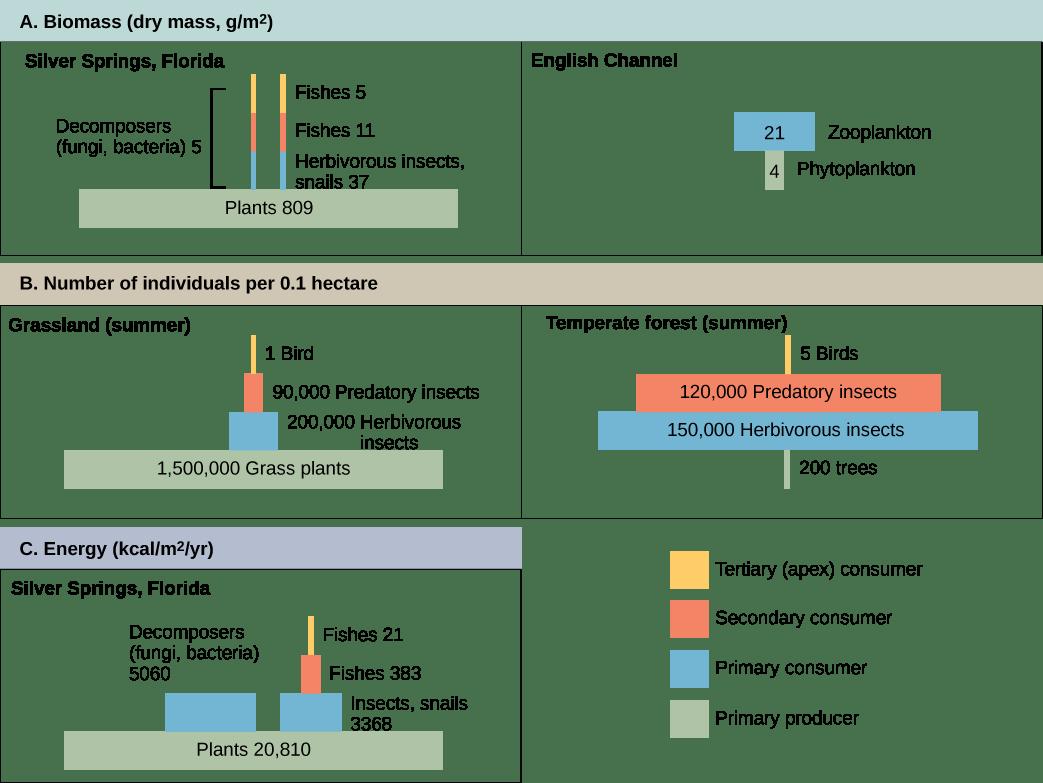 Energy Flow Through Ecosystems Biology 2e