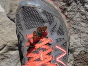 Butterfly on My Shoe