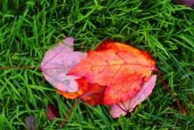autumn-leaves-6