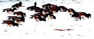 Ducks at Lake Padden, Bellingham, WA (photo by Karen Molenaar Terrell)
