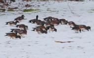 padden-ducks-2