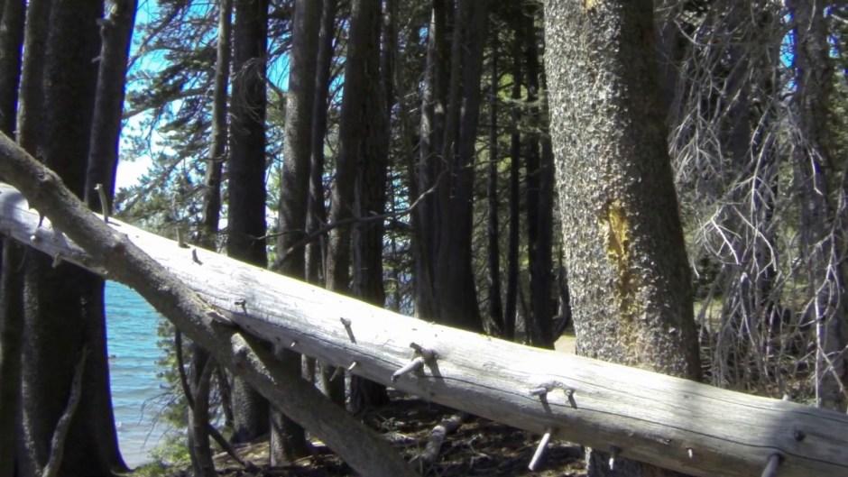 Fallen tree 01