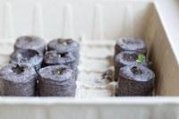 Plantation® Peat Pellet Greenhouse