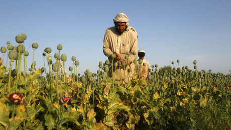 'World fails miserably to stop opium threat': RT reports from drug factory Afghanistan