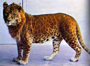 Real-life leopon