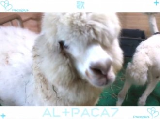 PacaPlus | Opening