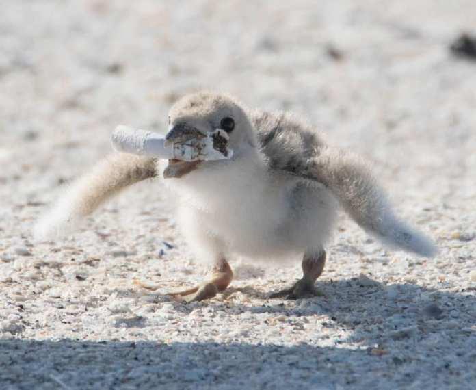 Фото с птенцом, поедающим окурок, заставило пользователей сети задуматься над своим отношением к природе 3