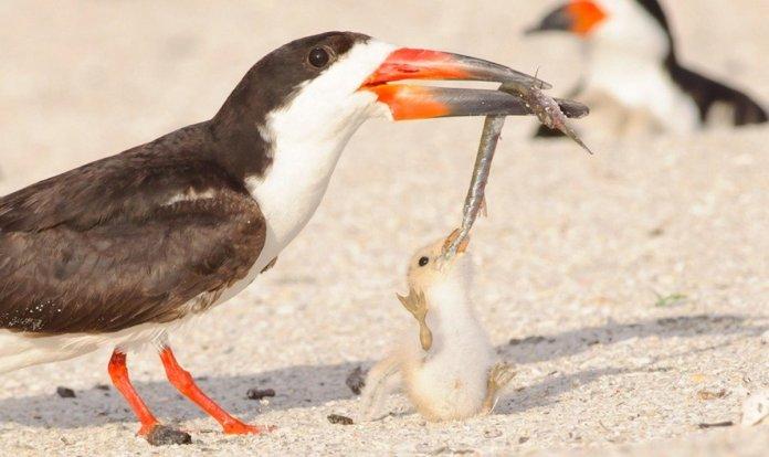 Фото с птенцом, поедающим окурок, заставило пользователей сети задуматься над своим отношением к природе 1