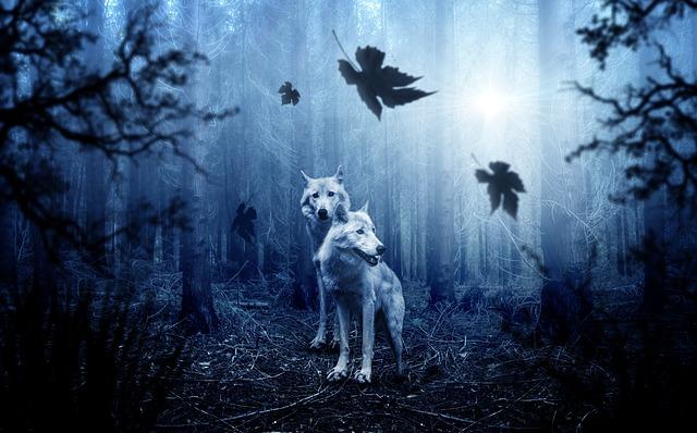 Photo de loups dans uen forêt, avec de grandes feuilles d'érable qui tombent, ambiance bleutée très fantasmagorique.
