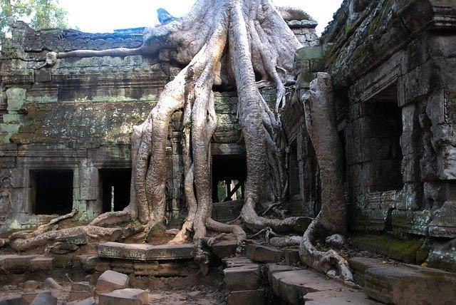 Arbres aux immenses racines poussant sur une ruine.