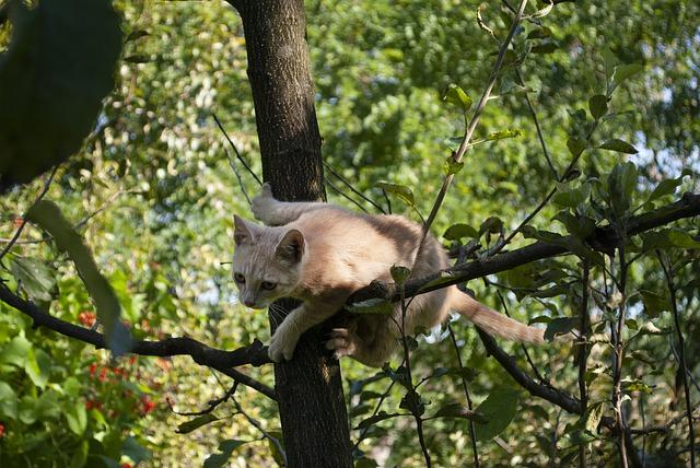 Chaton dans un arbre.