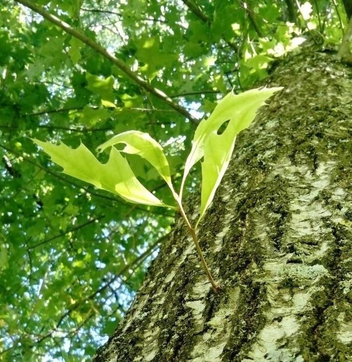 Photo d'une jeune branche ouvrant sur quelques feuilles vert pâle au milieu d'un tronc d'arbre.