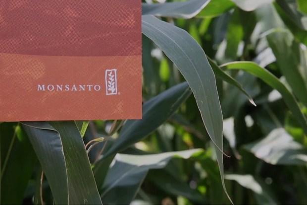Monsanto, biotechnologisch bedrijf.