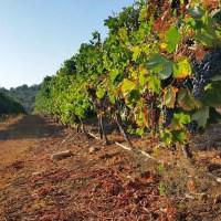 Bezopen overheidshetze tegen Israëlische wijn