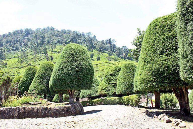 6 Wisata Alam di Bandung yang Instagrammable