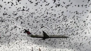 Avião cruza 'nuvem' de pássaros durante pouso nos EUA 3