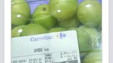 Umbú é vendida a R$ 105,90 o quilo em São Paulo 4