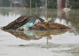 Temporada de chuvas deixa 186 mortos e afeta 33 milhões na China 5