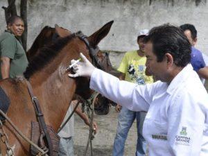 chip_cavalo-1-300x225 Em dois meses, mais de 600 animais recebem chips em Campina Grande