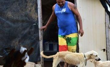 Agricultor vende casa para cuidar de cães abandonados em Monteiro 7