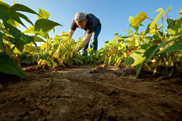 agricultura-1024x683 Pagamento do Garantia Safra em Monteiro só deverá acontecer em fevereiro