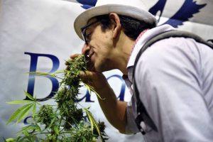 maconha-300x200 Evento no Uruguai aborda uso da maconha medicinal e efeitos paliativos