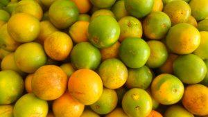 SAM_7043-2-300x169 Verdurão JK em Monteiro:  Frutas e verduras selecionadas diretamente da CEASA