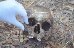 cranio_humano_cajazeiras-1-696x460-1-300x198 Cachorro encontra crânio humano em terreno na PB; polícia investiga o caso