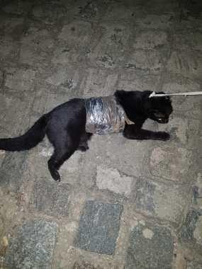 Gato é flagrado transportando drogas para presídio da PB 1