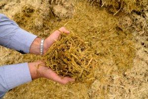 Secretaria de agricultura de Monteiro realiza serviços na zona rural do município 2