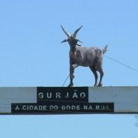 Festa do Bode na Rua 2019 começa nesta quinta-feira (18), em Gurjão, PB