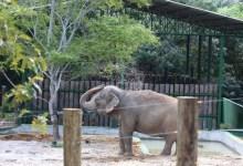 Pré-acordo é firmado para transferir elefanta Lady de João Pessoa para santuário no Mato Grosso 10