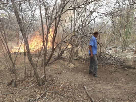 INCENDIO-ZONA-RURAL-MONTEIRO3-533x400 Incêndio volta a atingir zona rural de Monteiro