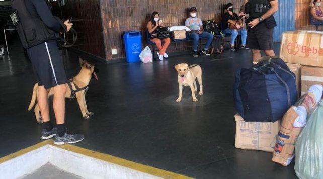 788cf69b-8cde-4c30-b480-1677b4444150-800x445-1 Polícia Militar treina novos cães farejadores para auxiliar nas operações contra os crimes na Paraíba