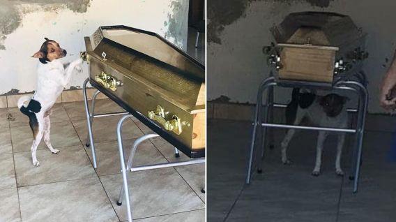 Cachorro Cachorro chora em velório de tutora e comove amigos e familiares na Bahia