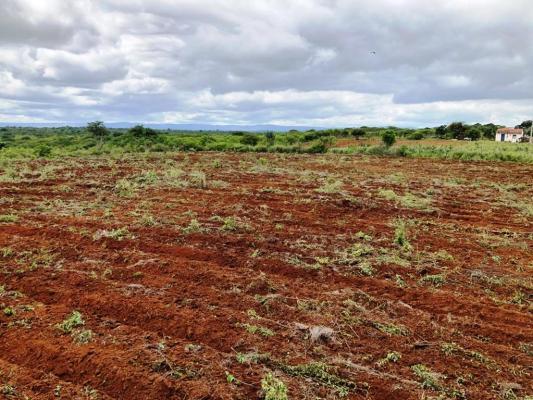 Corte-de-terra2-533x400 Secretaria de Agricultura realiza ações de corte de terra em várias comunidades rurais