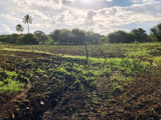 Corte-de-terra4-533x400 Secretaria de Agricultura realiza ações de corte de terra em várias comunidades rurais