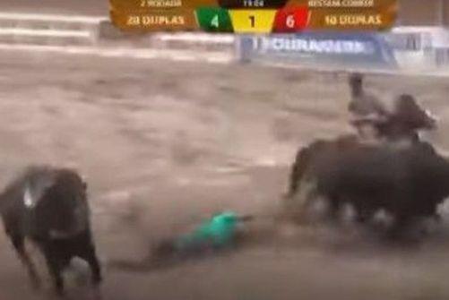 vaqueiro Vaqueiro alagoano morre após ser arrastado por um boi durante vaquejada em Pernambuco