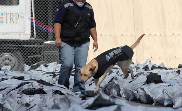 Sección canes utilizados para la búsqueda de drogas. Foto AFIP