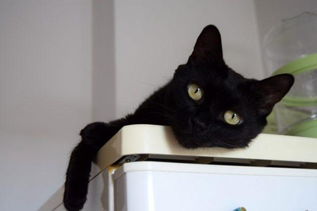 o pisica neagra