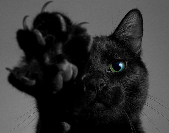 Black-cat-black-cats-cat-cat-claws-cat-paw-Favim.com-242281