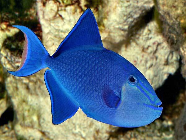 Dory, peștișorul uituc :D