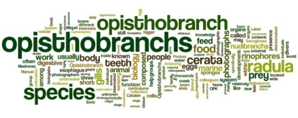 Opistobranquis.Info