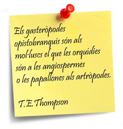 thompson-ca