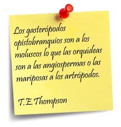 thompson-es